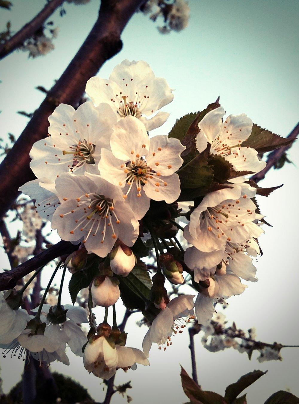Es ist Frühling im Garten